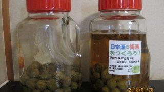梅酒瓶2本の写真