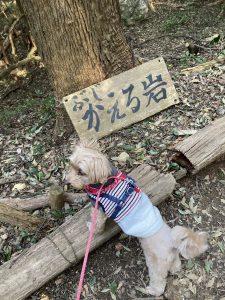かえる岩と犬の写真