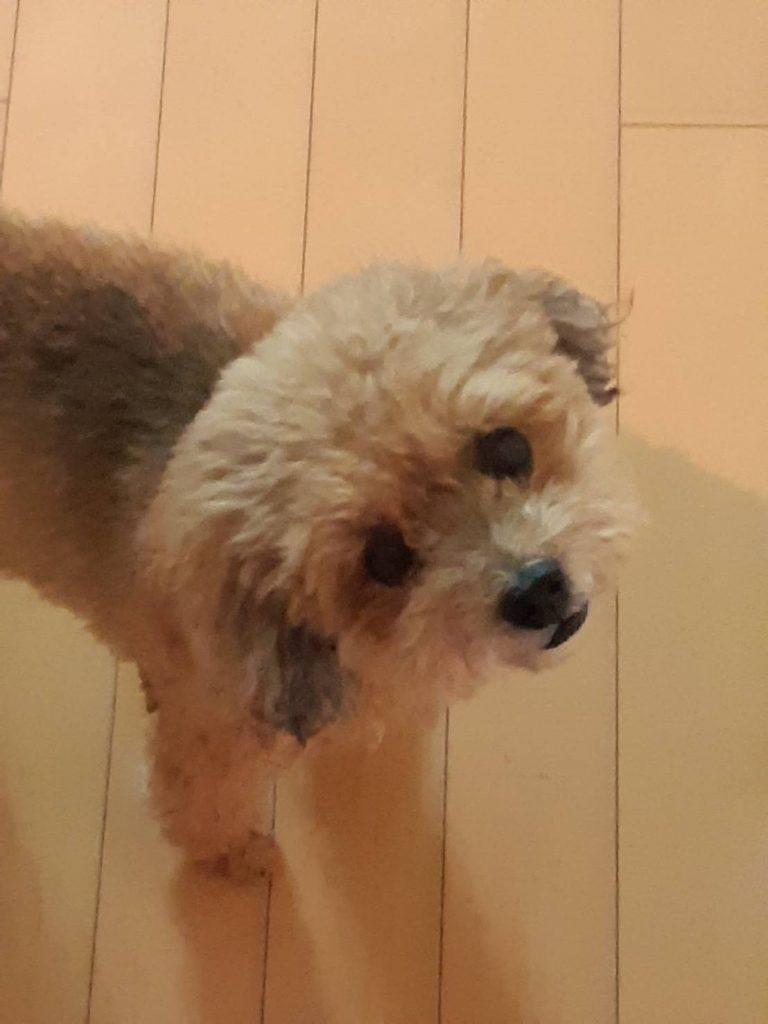 愛犬ティンクの画像